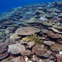 伊是名,サンゴ,ダイビング
