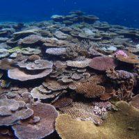 伊是名,サンゴ,海