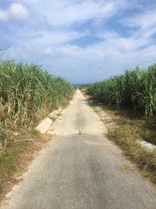 沖縄,伊是名,サトウキビ