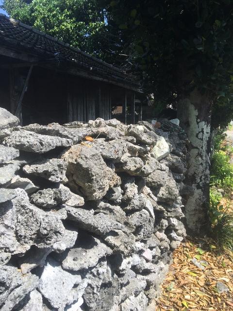 沖縄,伊是名,サンゴ,石垣