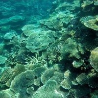 沖縄,伊是名,SUP,シュノーケル,サンゴ