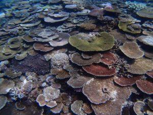 伊是名,サンゴ,SUP, シュノーケル