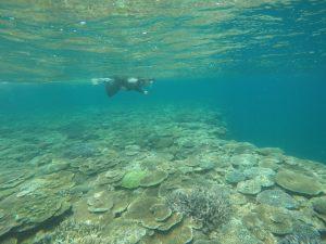 沖縄,伊是名,シュノーケル,サンゴ