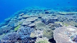 沖縄,伊是名,サンゴ
