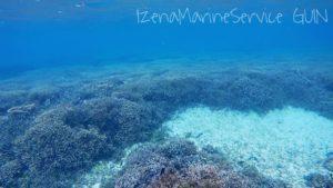 サンゴ,伊是名,島