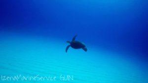 ウミガメ,海,水中,ダイビング
