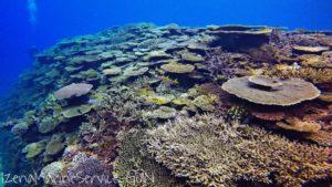 サンゴ,礁,伊是名,ダイビング,沖縄