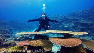 沖縄,伊是名,サンゴ,大きい