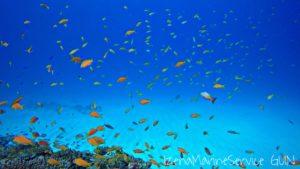 伊是名,ダイビング,沖縄,北部,魚