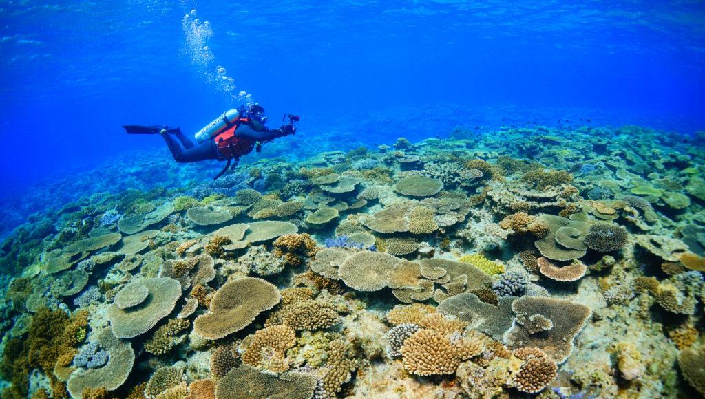 ダイビング,伊是名,サンゴ,ポイント