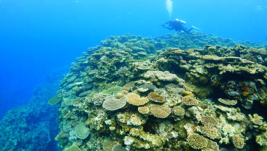 サンゴ,伊是名,ダイビング,沖縄