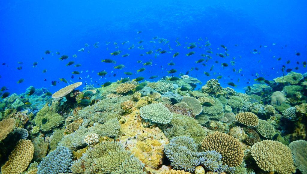 魚,サンゴ,ダイビング,伊是名,離島
