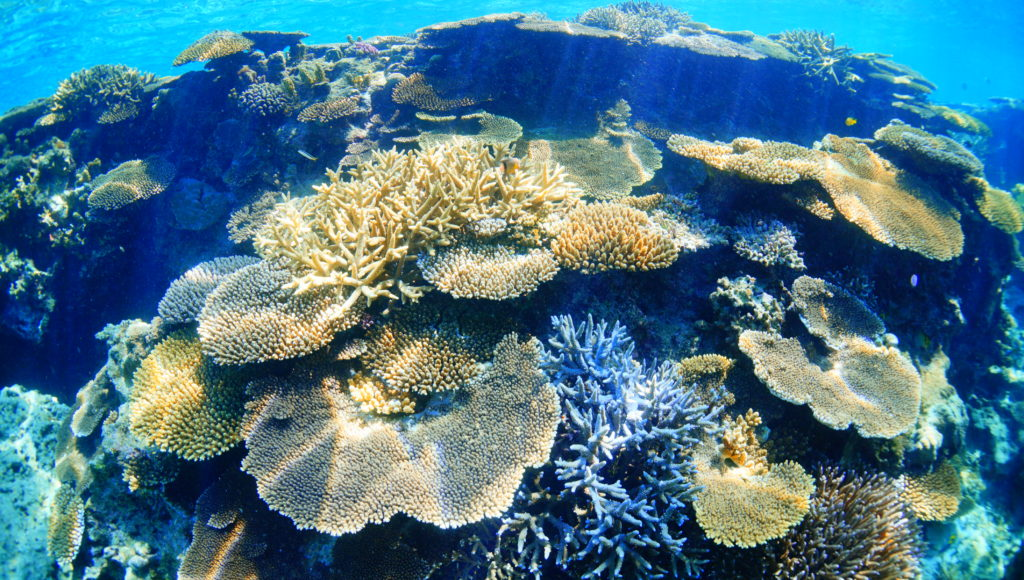 伊是名,ダイビング,サンゴ
