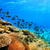 ダイビング,サンゴ,沖縄,伊是名