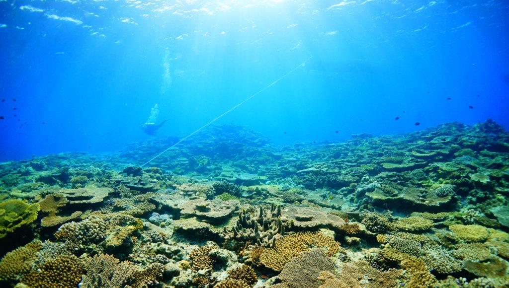 ダイビング,サンゴ,伊是名,沖縄