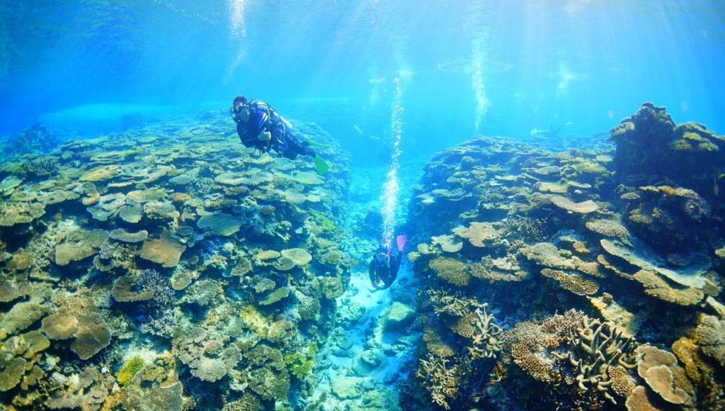 伊是名,サンゴ,ダイビング,グイン