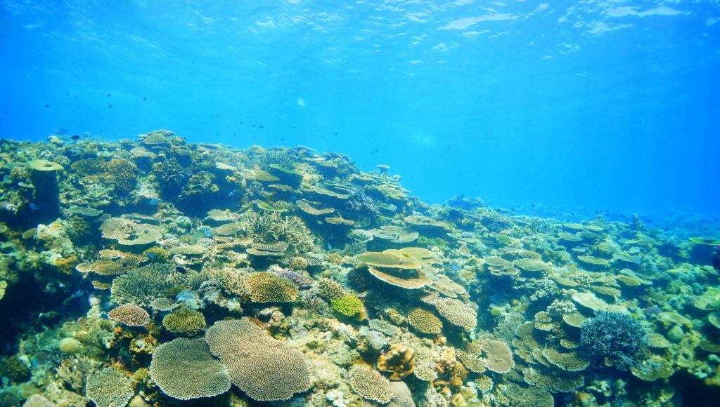 サンゴ,伊是名,沖縄,ダイビング