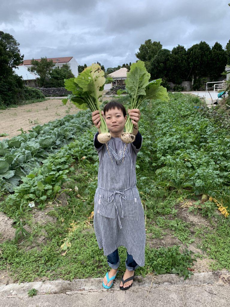 畑,収穫,カブ,伊是名,沖縄