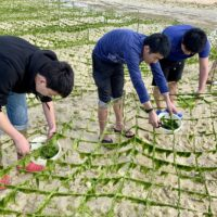 修学旅行のアーサ収穫体験