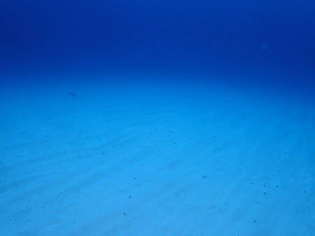伊是名,ダイビング,砂地