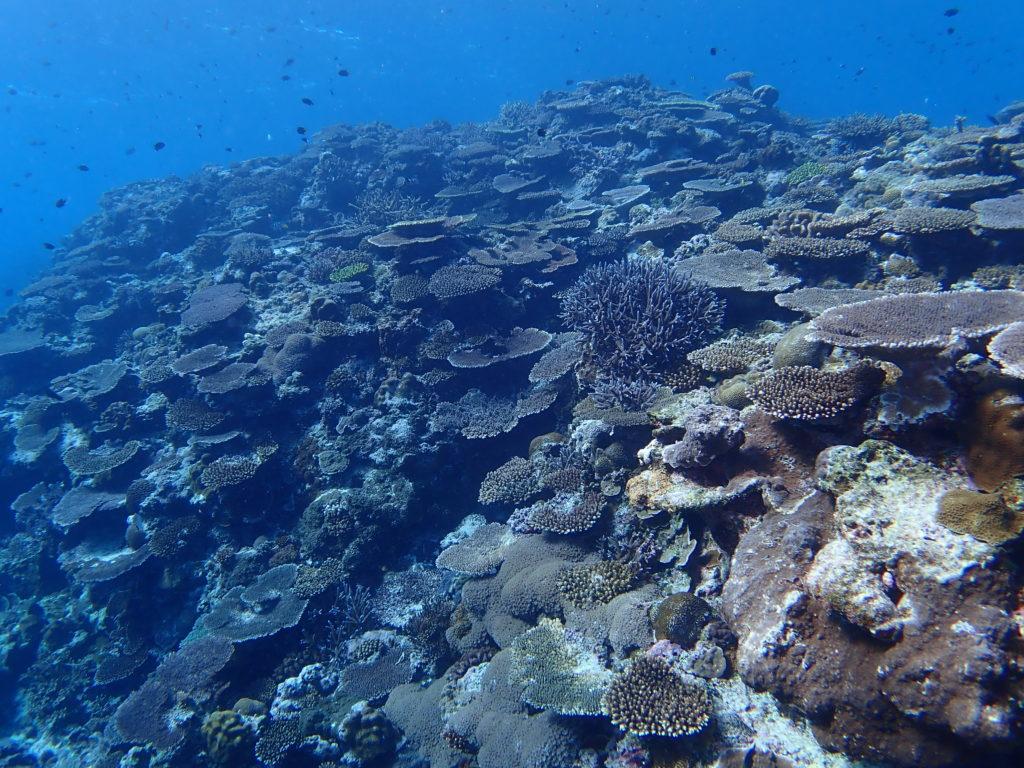 屋那覇の東のサンゴ礁