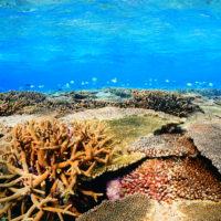 伊是名の浅瀬のサンゴ礁