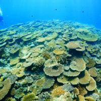 伊是名島のサンゴ礁