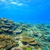 屋那覇のあがりの浅瀬のサンゴ礁