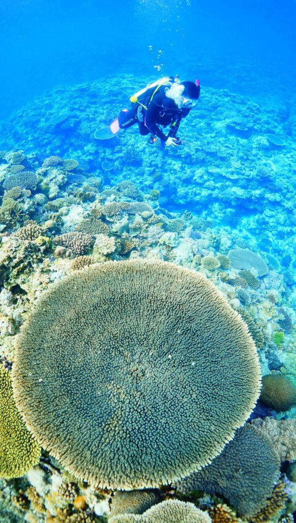 伊是名で見つけた丸いサンゴ