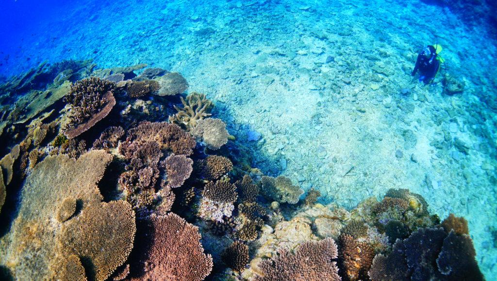 伊是名の体験ダイビングでサンゴ礁をみる