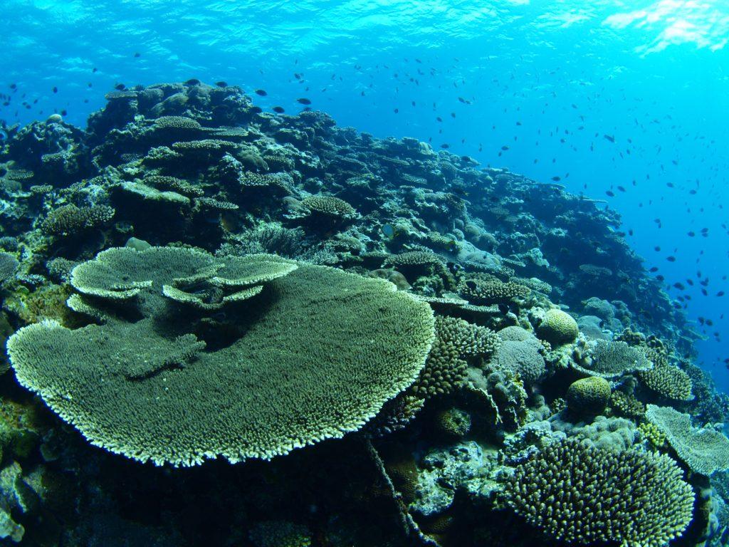 伊是名のサンゴ礁ポイント