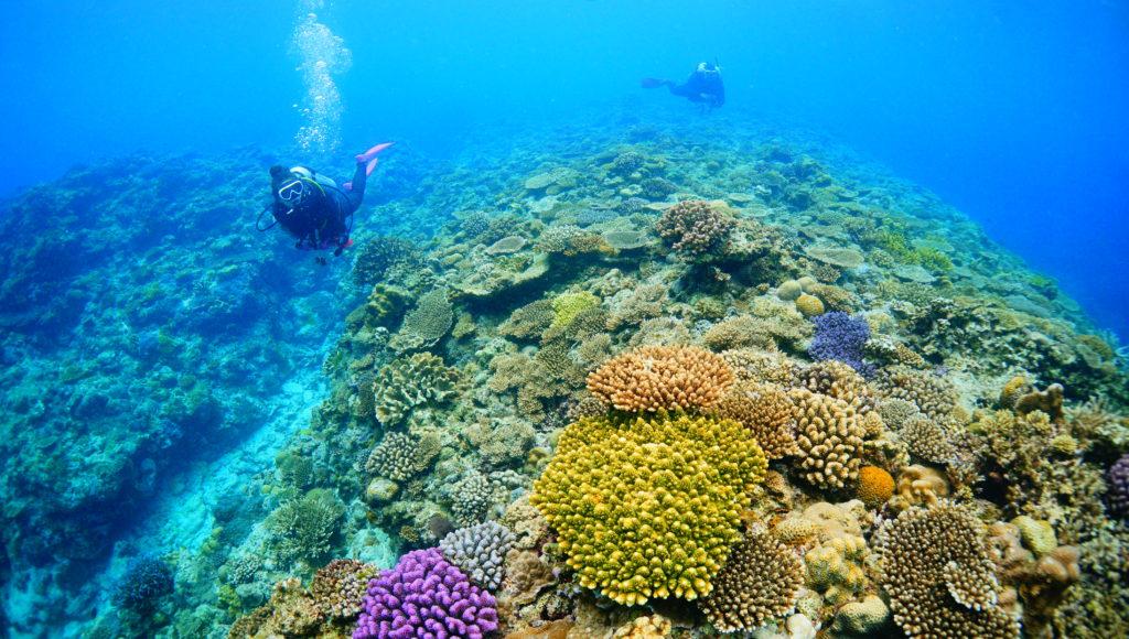 伊是名のサンゴ礁でダイビング