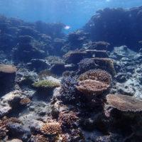 伊是名のダイビングで観れるサンゴ礁