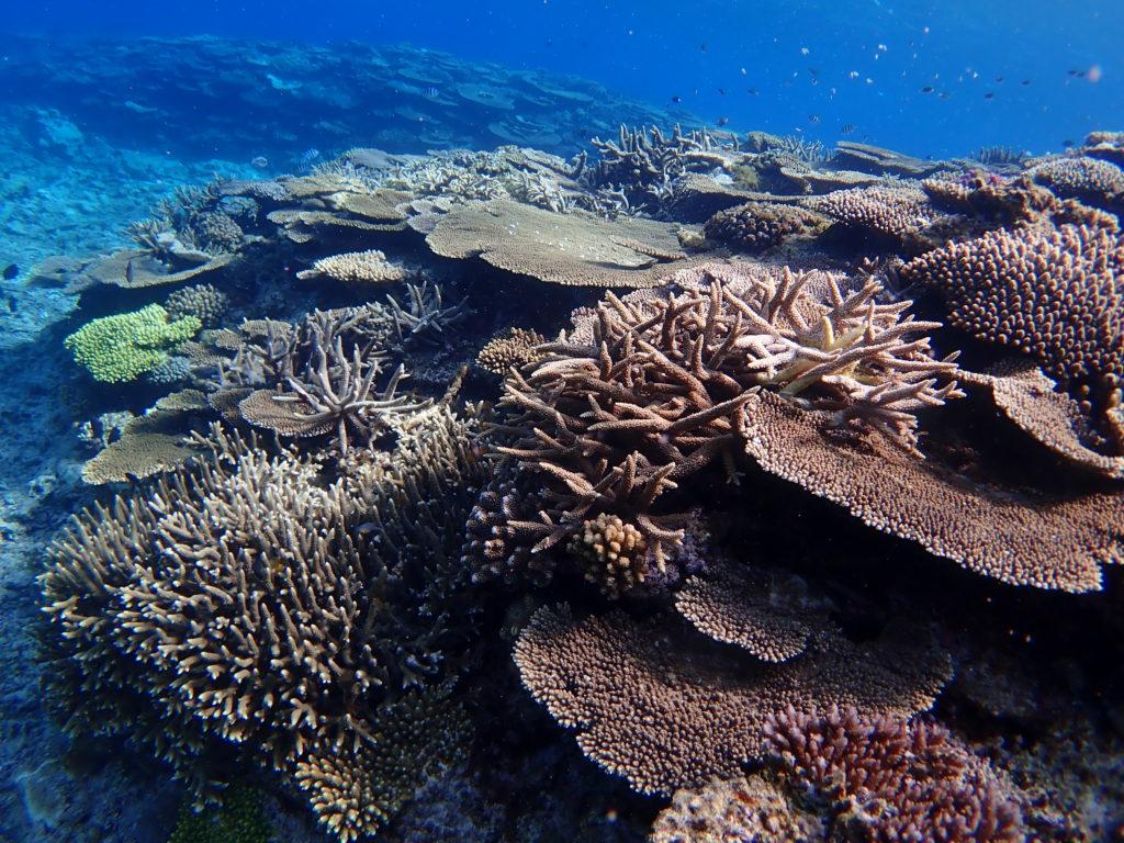 伊是名のサンゴ礁をシュノーケルで